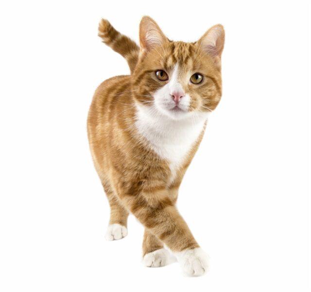 2 sesiones de comportamiento felino online (y mes de asesoramiento email)